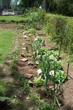 Art's garden 2005