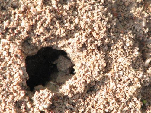 waldo the ant!