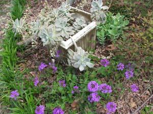 verbena garden