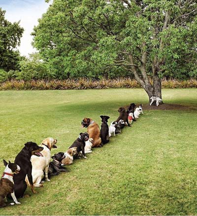 dogs for trees