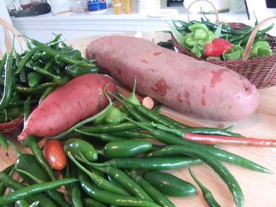 An abundance of peppers & sweet potatoes