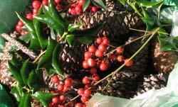 scented pine cones 2010