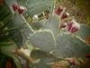 Love is like a cactus... beautiful but painful when handled carelessly.