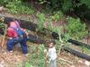 Planting Plum trees