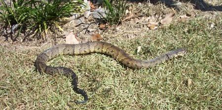 Snake in Art's Garden 2005