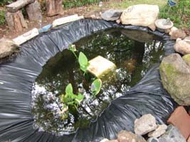 Pond finished